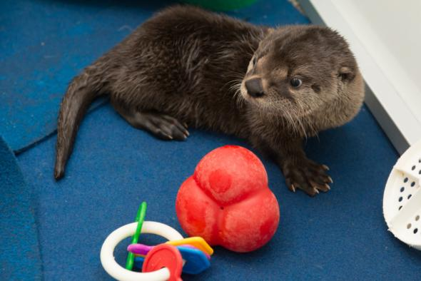 H_river-otter-pup-toys