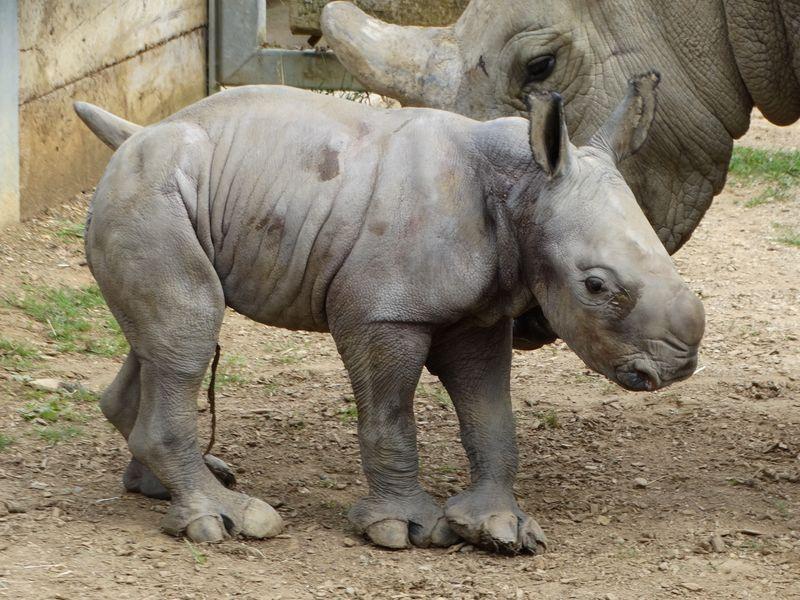 2_Baby Rhino paddock 1