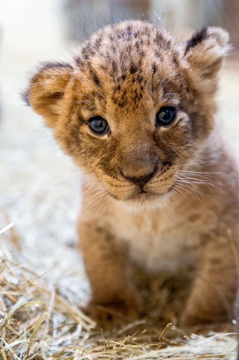 3_Female cub-Jackie Curts