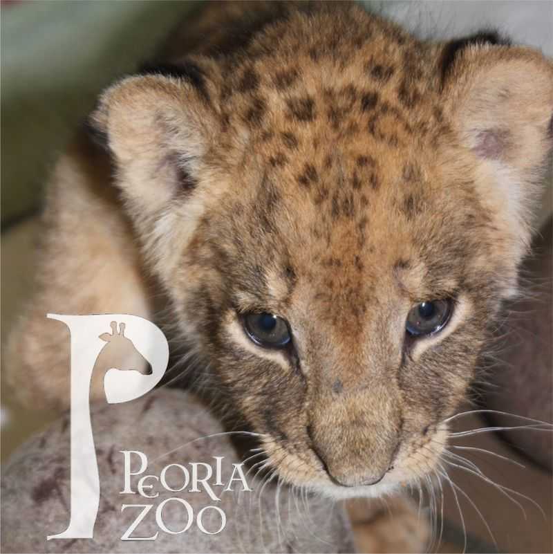 4_2 for zoo borns