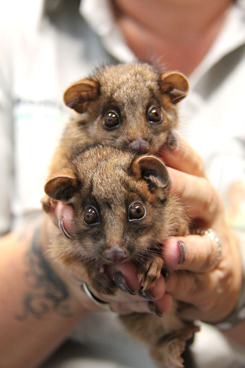 7_Possum Twins (10)