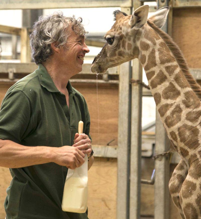 2_2016 05 PZ giraffe 1
