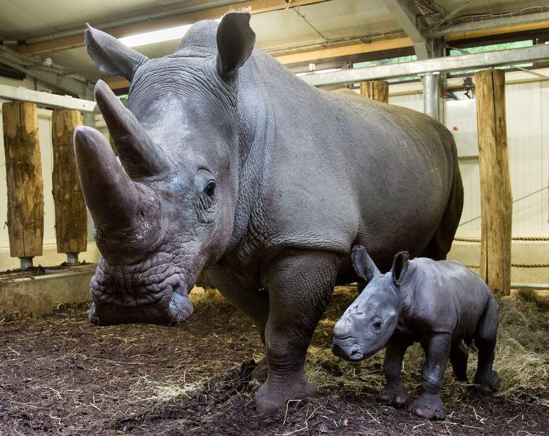 Rhino6 copy