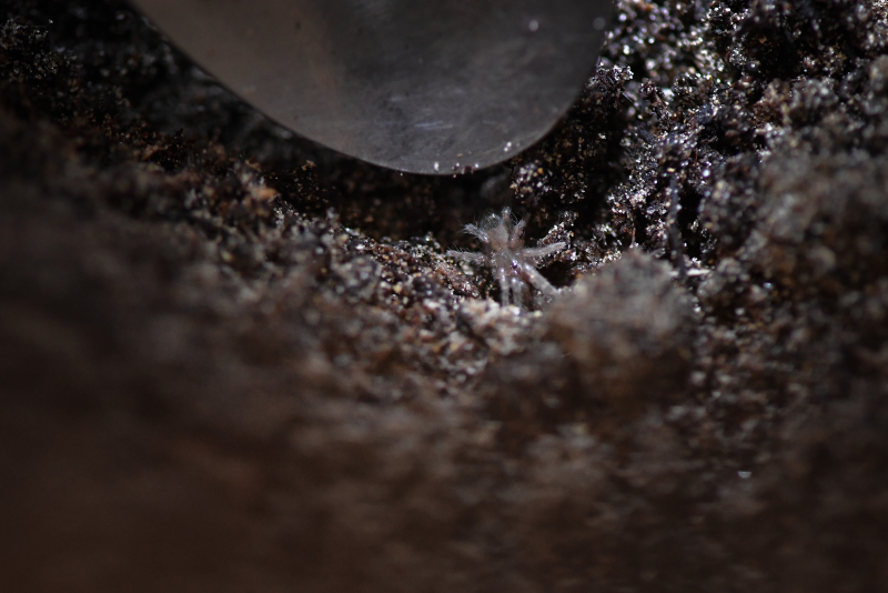 5_Montserrat tarantulas hatch in 'world first' at Chester Zoo (4)