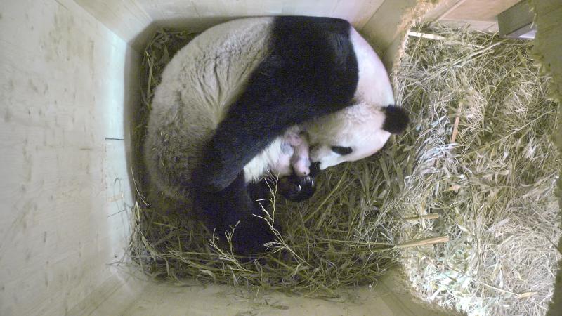 1_Pandazwillinge 20_August