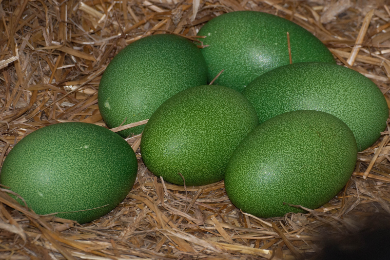 2_no.1-eggs