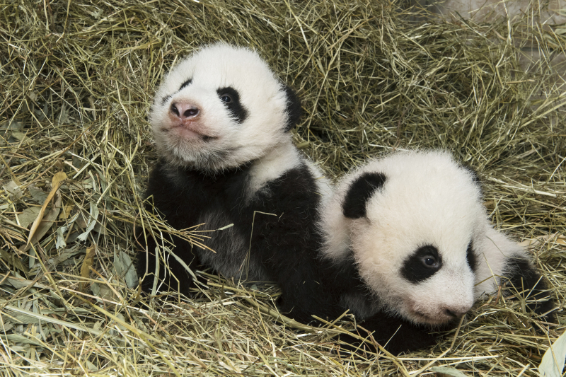 2_Pandas_TGS_Zupanc_23