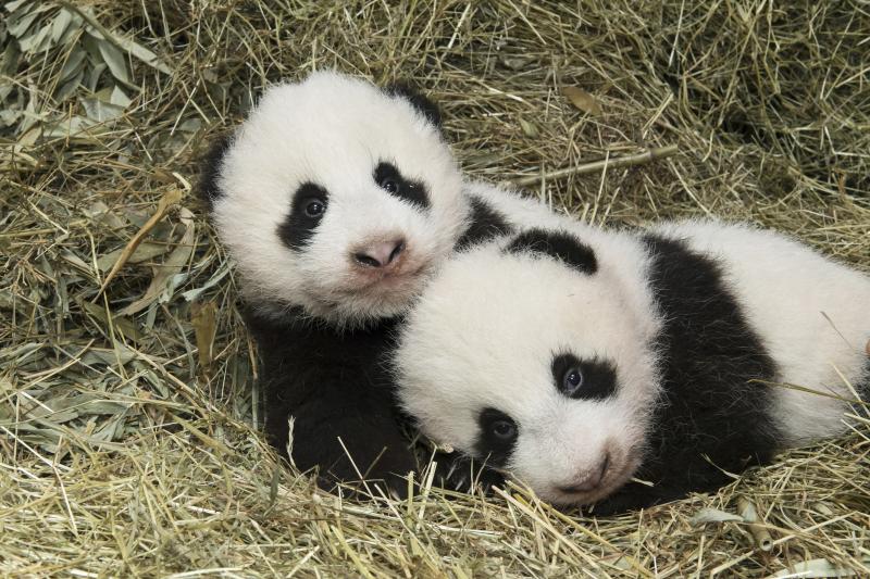 3_Pandas_TGS_Zupanc_26