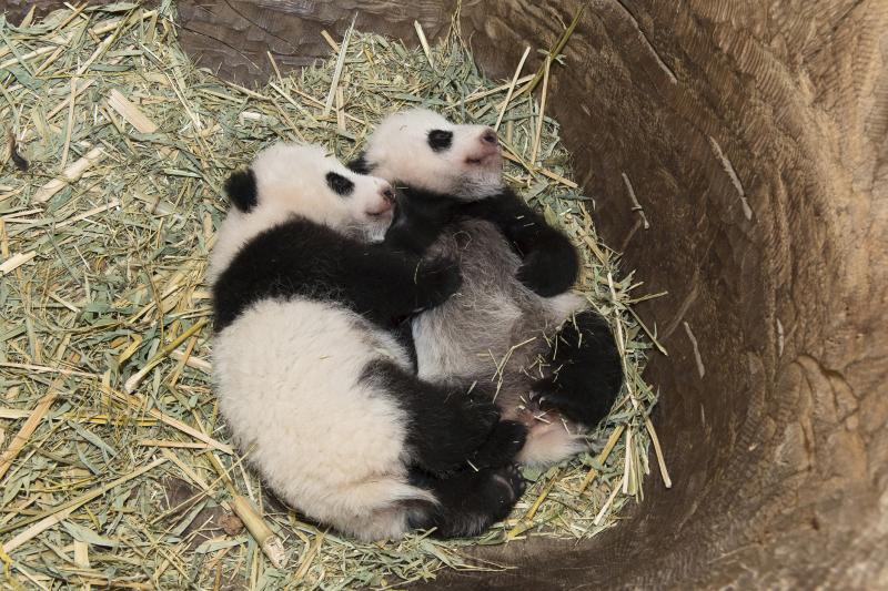 11_Pandas_TGS_Zupanc_05