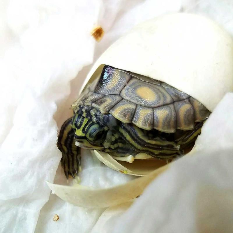 3_map-turtles-3-web