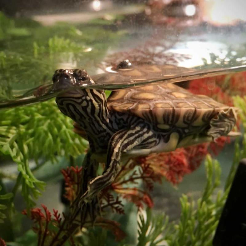 4_map-turtles-5-web