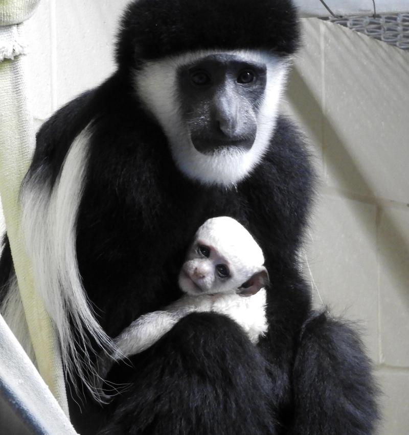 Cincinnati Zoo's 'Baby New Year' Is Announced