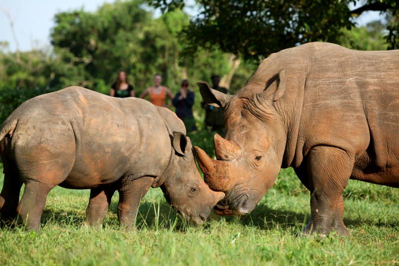 1_New Baby Rhino in Uganda