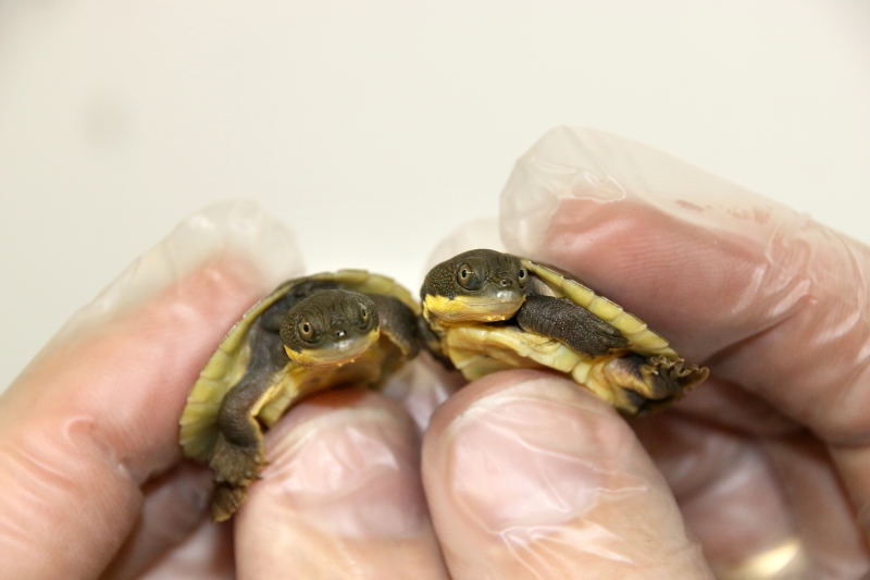 2_Hatchlings 3_Photo by Paul Fahy