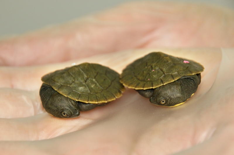 3_Hatchlings 9_Photo by Paul Fahy