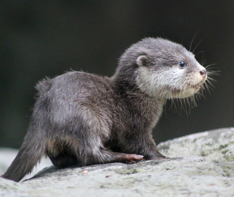 Otter Pup 6_Photo by Paul Fahy