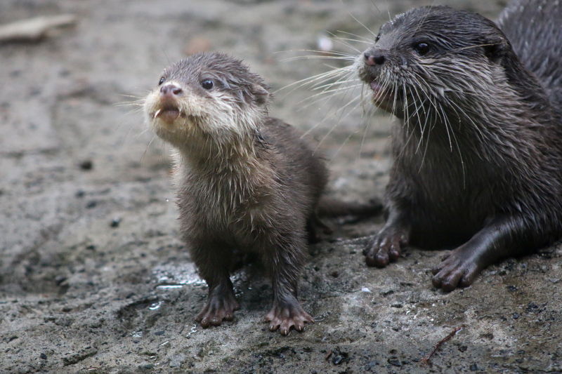 Otter Pup 4_Photo by Paul Fahy