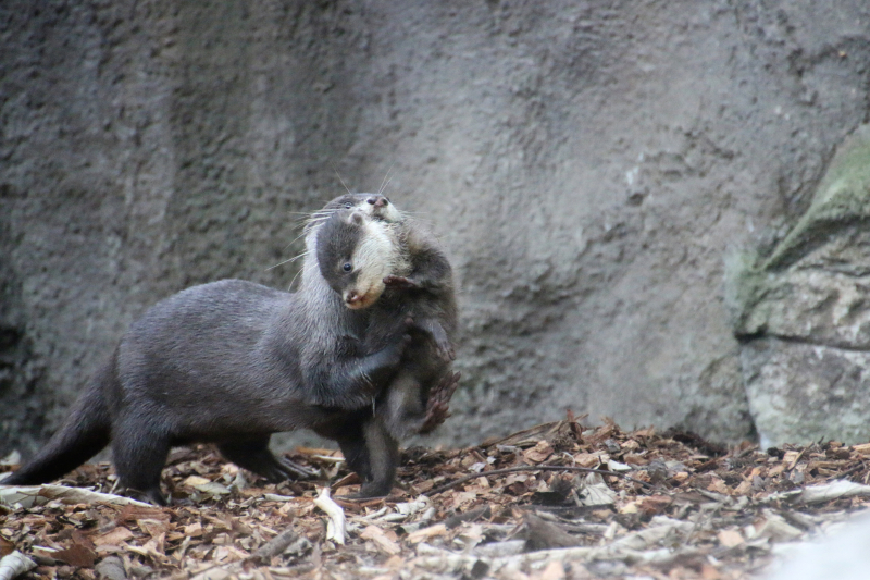 Otter Pup 14_Photo by Paul Fahy