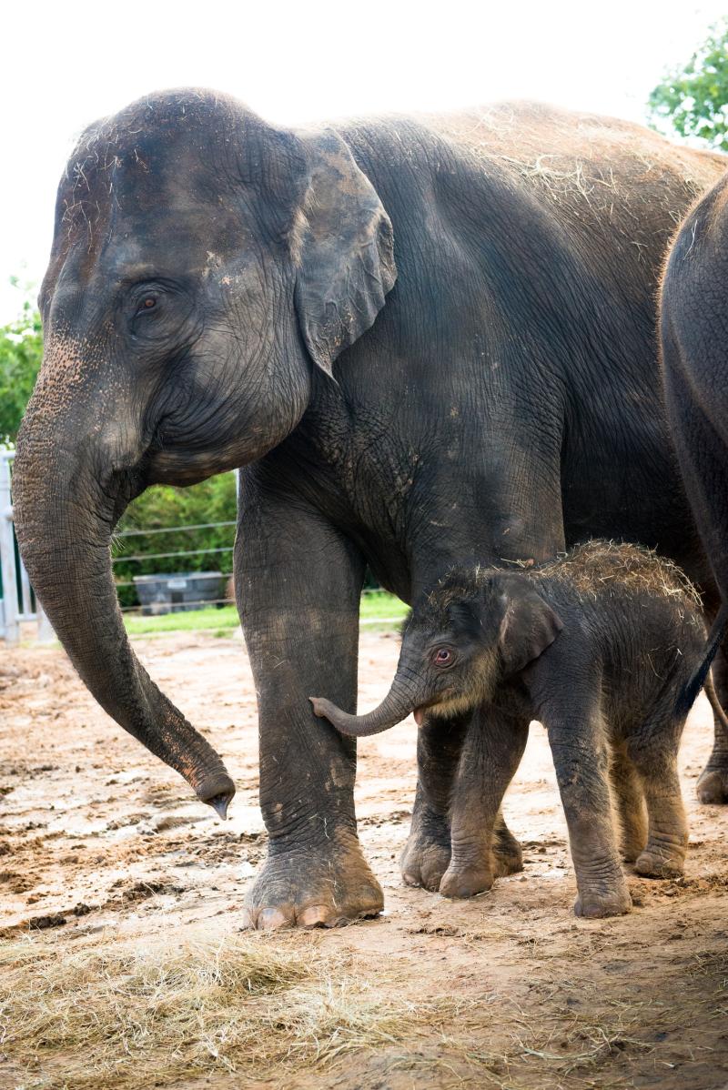 5_Baby Elephant Joy Outside-0007-7042