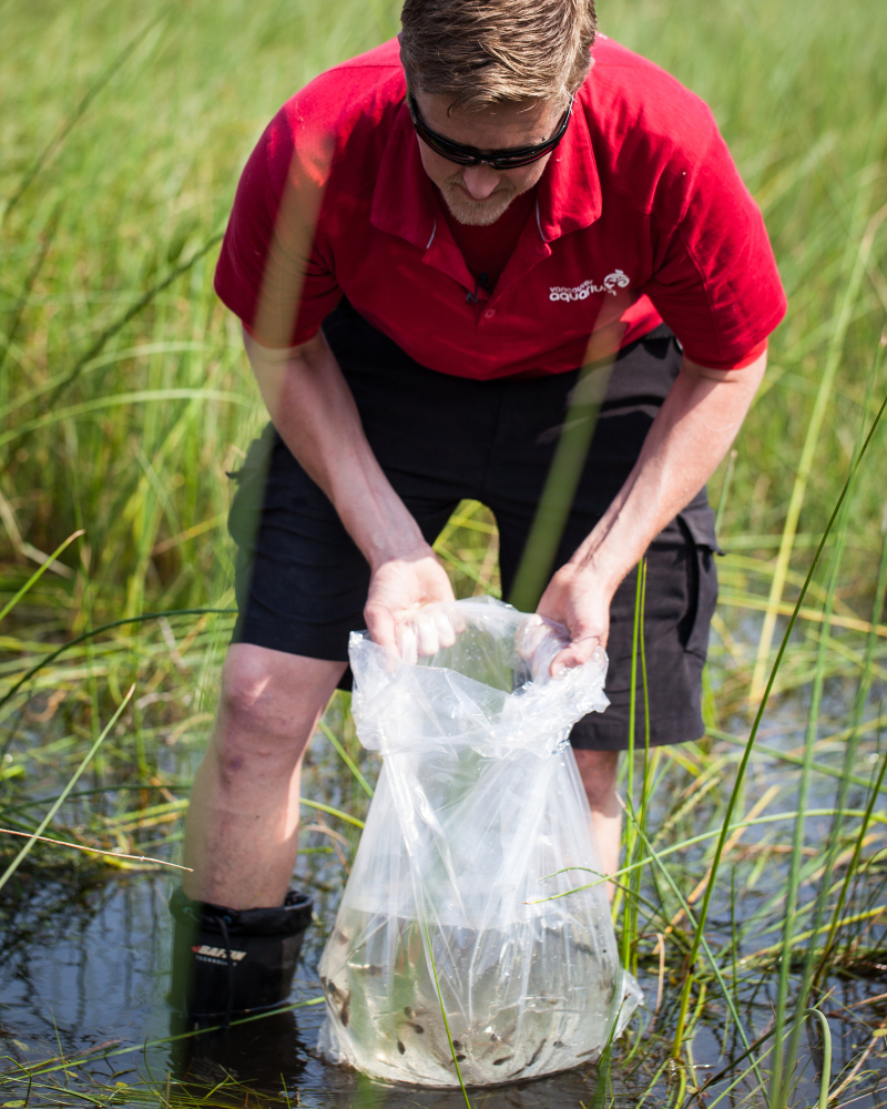 2017 Northern Leopard Frog Release_Mark Yuen for Vancouver Aquarium_IMG_1376