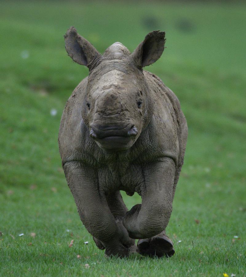 11_Rhino baby Alan various  (photo credit Jackie Thomas) (46)