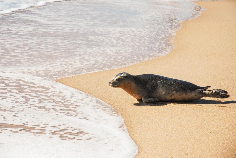 Mystic Aquarium Harbor Seal Release Lavendar Blue Bell 1