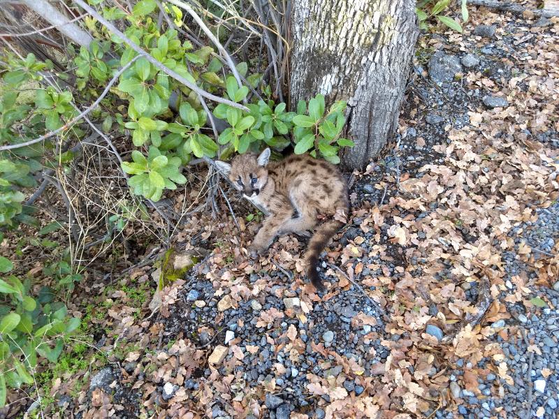 5_Kitten where found roadside in Coloma