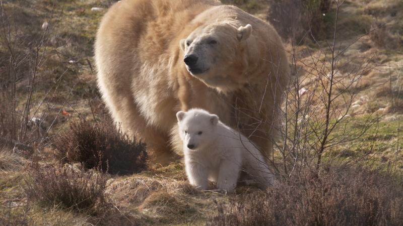 5_Polar Bear cub and Victoria
