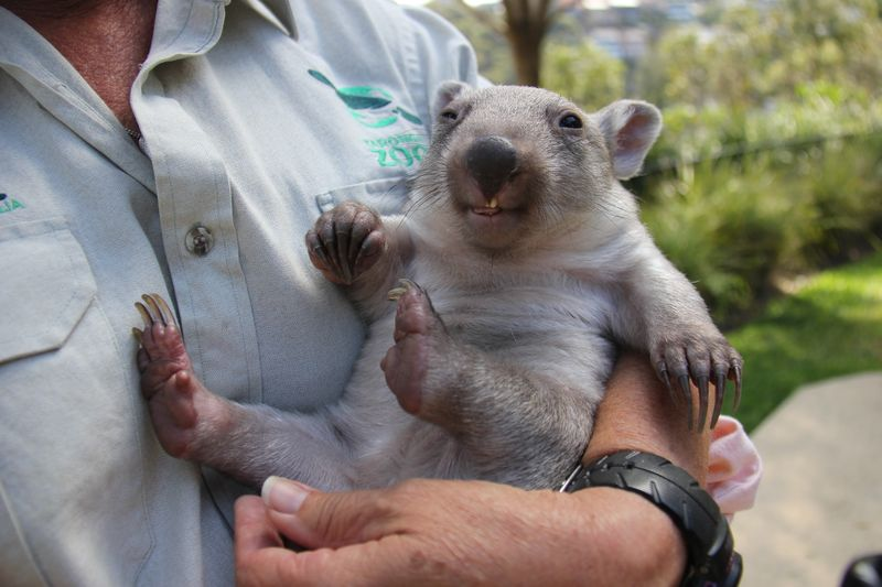 Chloe the Wombat (6)