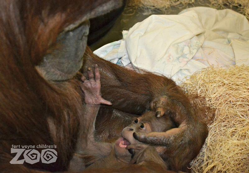 Asmara 10 days old - credit Angie Selzer