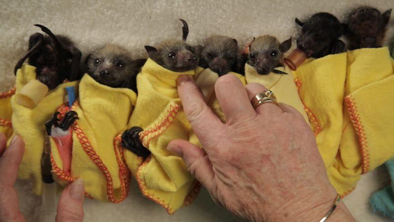 Bat row 2
