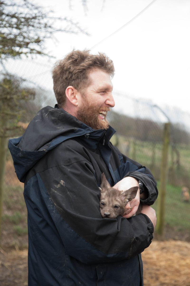 Head Keeper Richard Barnes holds a painted pup at Port Lympne Reserve c Dave Rolfe