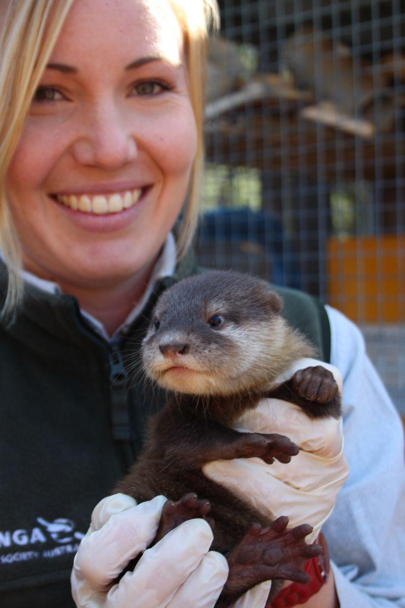 Otter pups_6.3.15_MT (2)