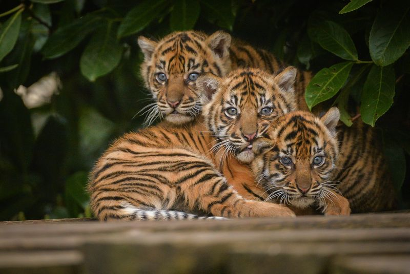 The three cubs together after their check ups (3)