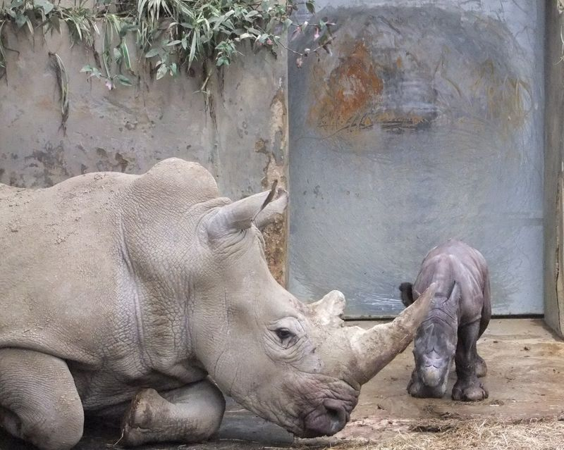 Baby Rhino and Ruby together