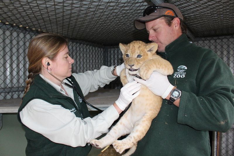 Lion cubs vaccination_SM_7.4.15 (30)