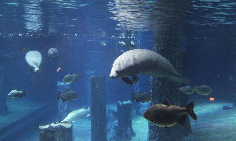 Amazon Flooded Forest - world's largest freshwater aquarium