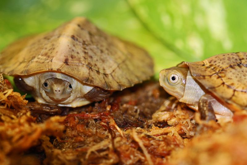 3 turtle