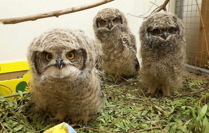 8_Owls