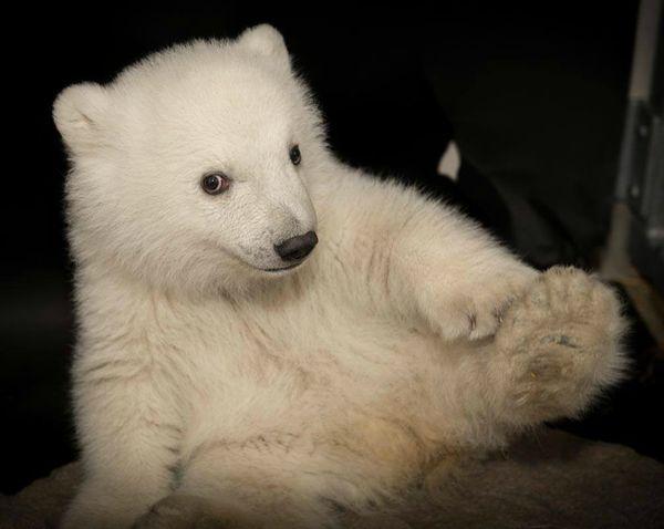 A Polar Bear Cub S Favorite Things Zooborns