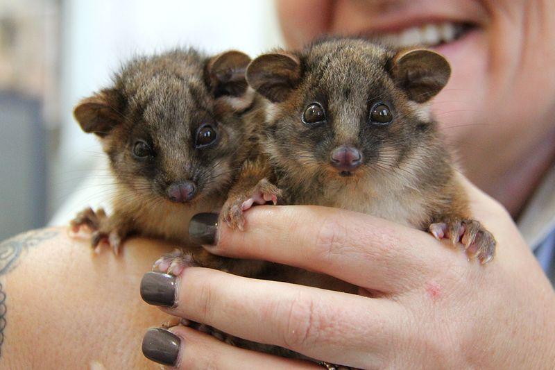 1_Possum Twins (8)
