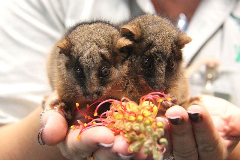 6_Possum Twins (11)