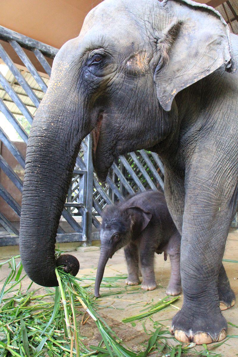 2_Image 3_NS baby ele and mom Sri Nandong_WRS