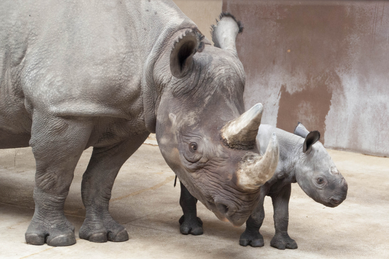 3_GPZ_Imara and Baby Boy Rhino_2_2016