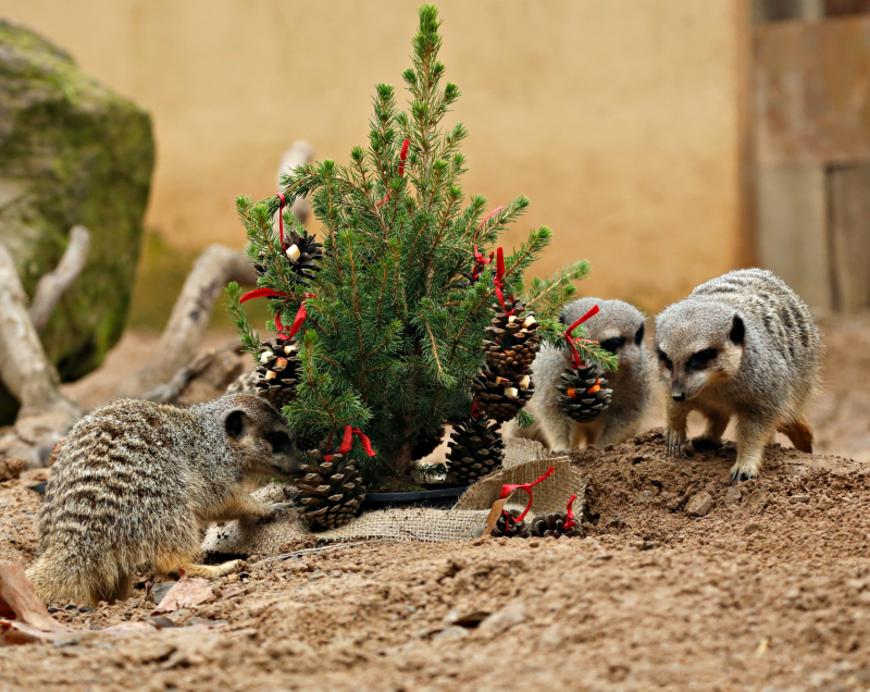 It S Christmas For The Animals At London Zoo Zooborns