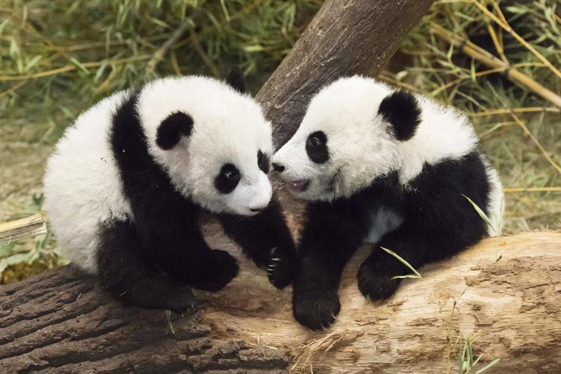 2_Pandas_TGS_Zupanc_08