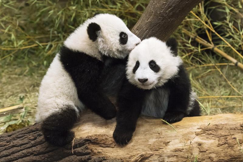 3_Pandas_TGS_Zupanc_07-01