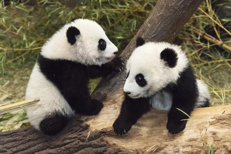 4_Pandas_TGS_Zupanc_09