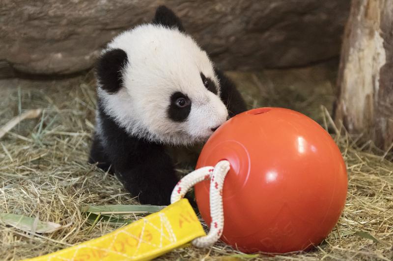 10_Pandas_TGS_Zupanc_13