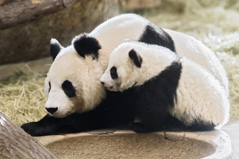 13_Pandas_TGS_Zupanc_15-01